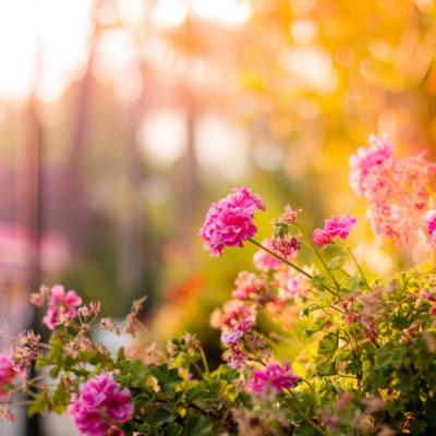 Shrubs that Will Brighten up Any Garden