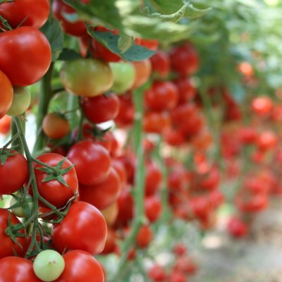 Cultivating an Organic Garden on a Budget